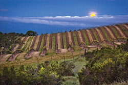 Moon over Vineyard by Kirk Kennedy
